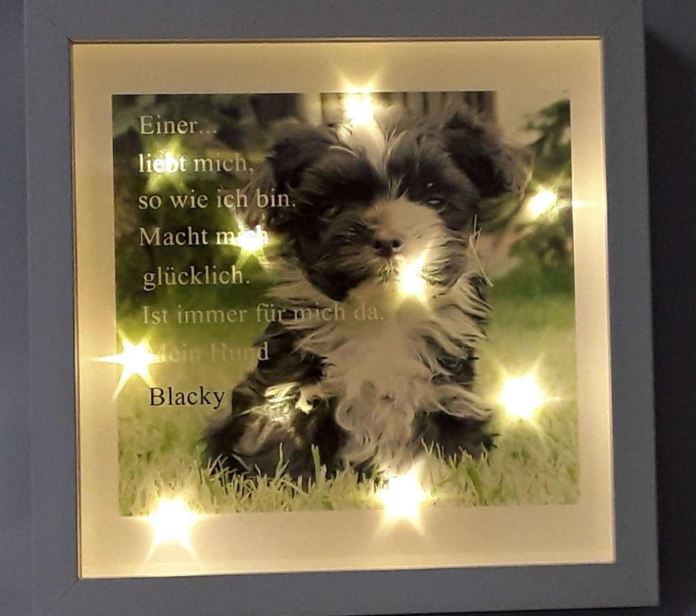 Bilderrahmen beleuchtet Hund Katze Spruch Geschenk 538/54 ...